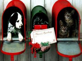 новогодние котята и собачки